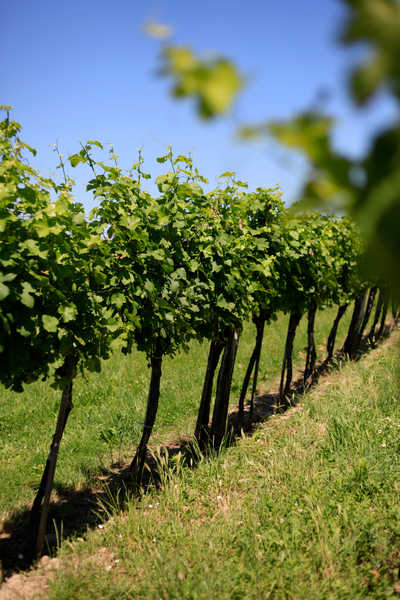 Weinberge Weinviertel erleben - Hopfeld Dreikönigshof