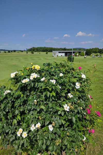 Blumen am Golfplatz Spillern - Hotel Dreikönigshof